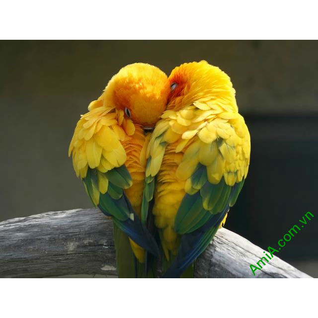 Hinh anh dai dien buc tranh doi chim treo phong ngu AmiA